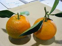 鏡餅についてる橙