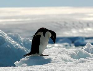 南極と北極の違いとは