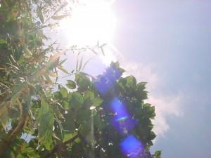 猛暑の日差し