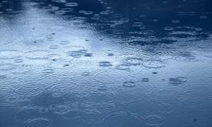 雨で花粉症がひどい
